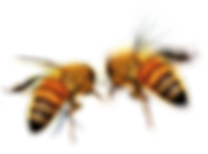 two bees.png
