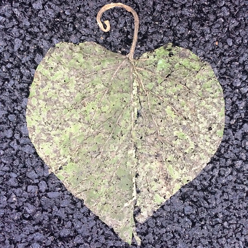 Embedded Leaf