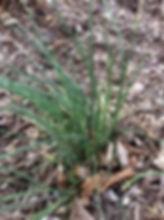 Garlic Onions 1.jpg