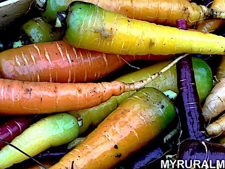 (Ita-Eng) La carota multicolore / Multicoloured carrot