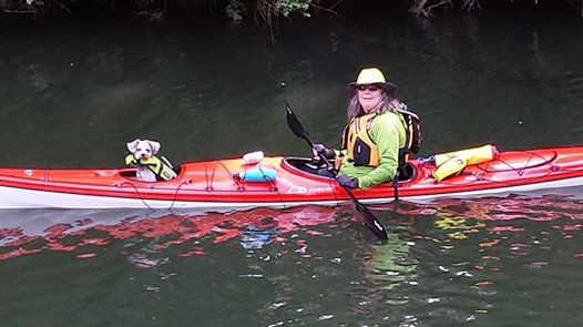 Dogs love to kayak