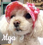MyaText.jpg