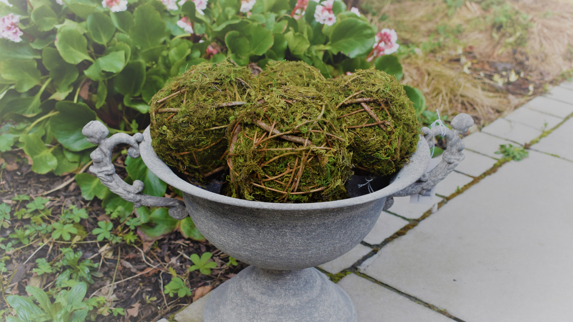 Moss Balls in Urn with Handles .JPG