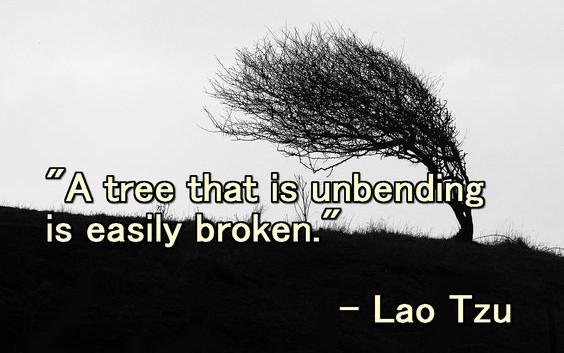 A tree that is unbending is easily broke