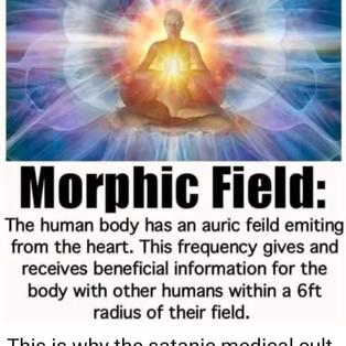 morphic field.jpg