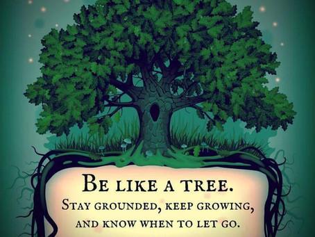Stand Like a tree