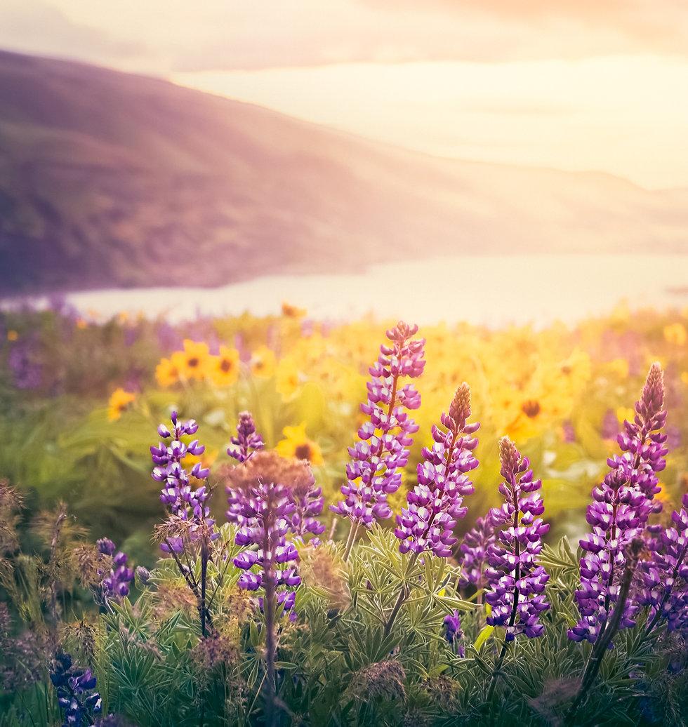 OR - Flowers.jpg