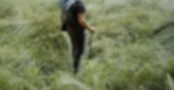 forest_Omerpolak.JPG