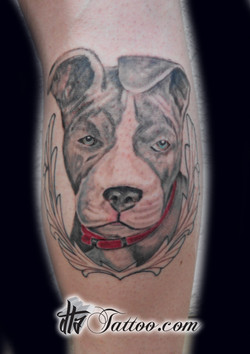 castro+puppy+session+1.jpg