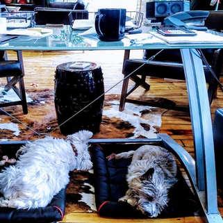 Salt & Shadow Sleeping.jpg