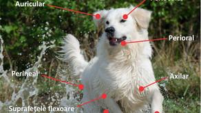 Dermatita atopică – cea mai comună problemă alergică la câini