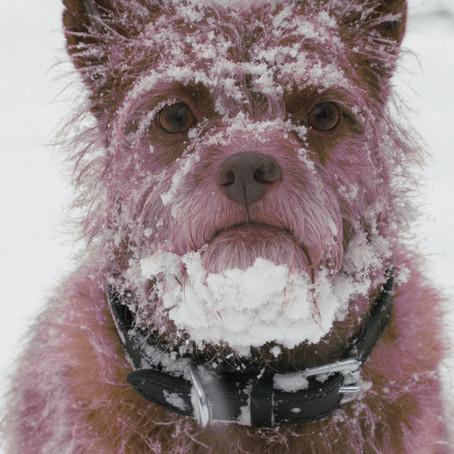 Ieșiți cu câinele mai des decât doriți? Giardia poate fi cauza...