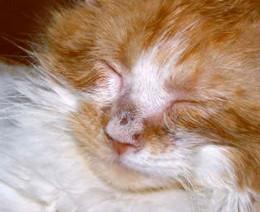 Dermatofitoza, boală micotică ce poate afecta și omul