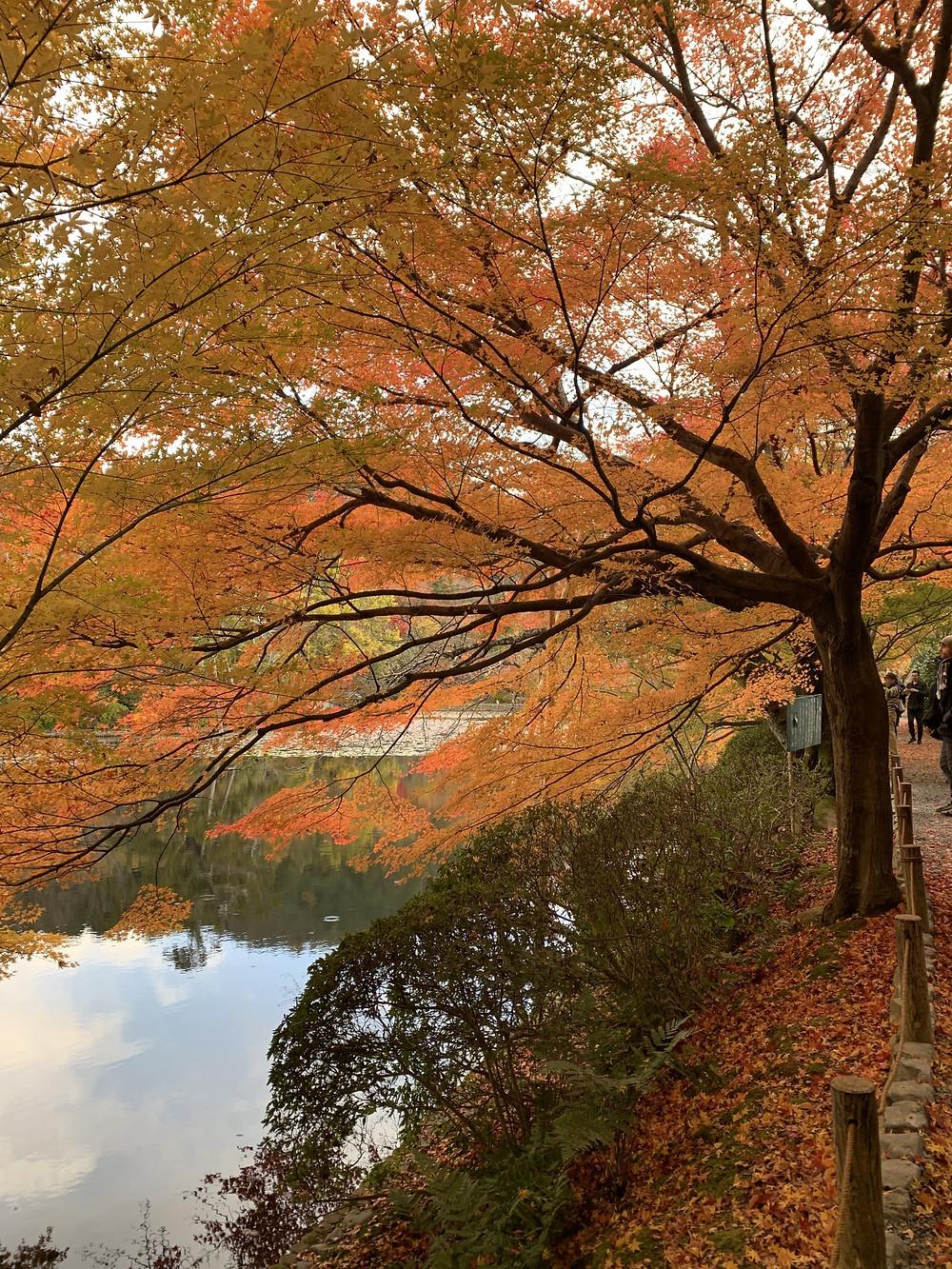 Outono em Kyoto, Japão