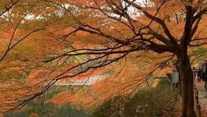 O que fazer no Japão durante o outono?