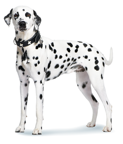Dog with Icon-09.png