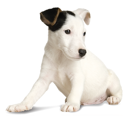White Puppy-01.png