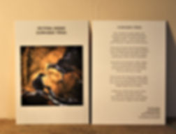Kunstkarte SCHWARZE VÖGEL DIN A6/ beidseitig bedruckt 2,50-€ plus Versand
