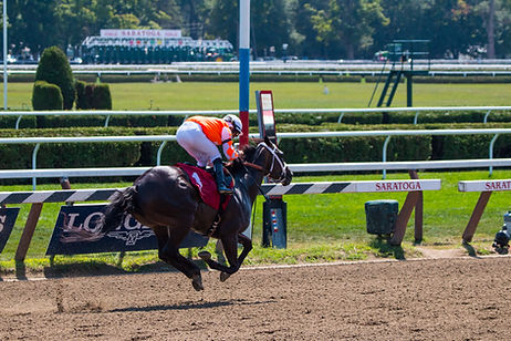 Photography Horse off ground gallop, Saratoga Raceway by Jonathan Rizzo