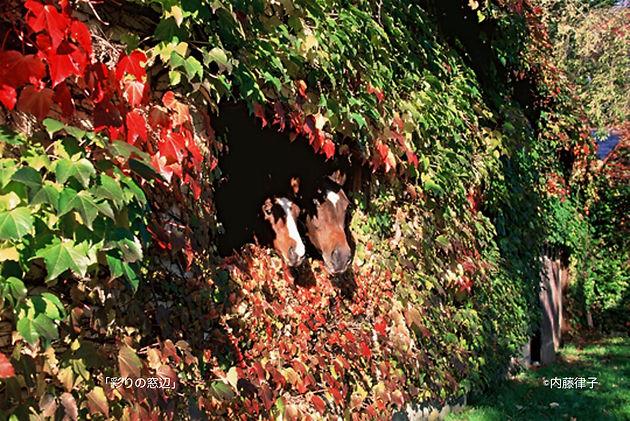 10月「彩りの窓辺」2000/10/19高岸__01 のコピー.jpg
