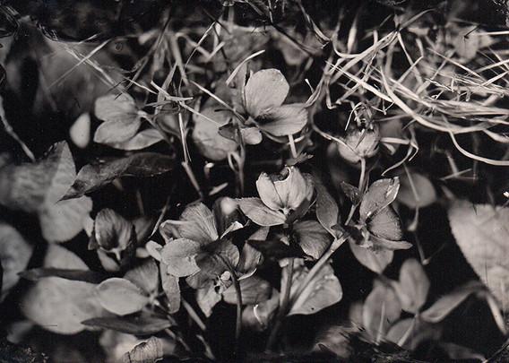 paysage au collodion2