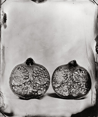 Nature morte collodion 6