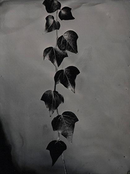 Ferrotype 10X12cm