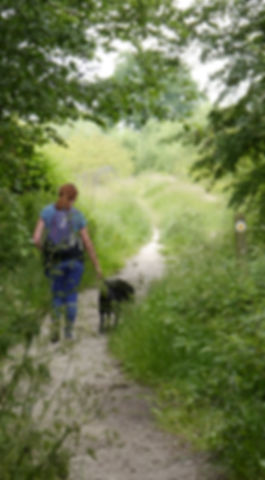 Colchester Orbital: dog walker at Chesterwell, Mile End