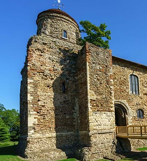 Colchester Castle Sycamore.png