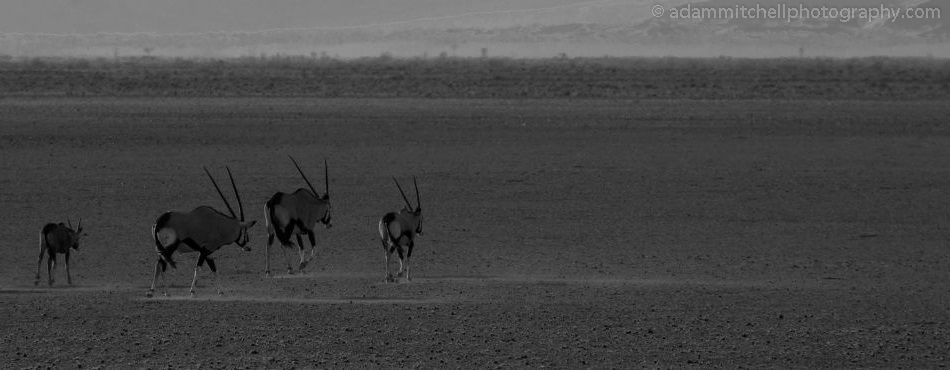 Oryx, Sossusvlei
