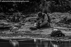 Photographer, Aldabra