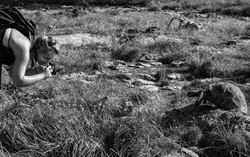 Photographing a tortoise, Aldabra