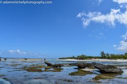 Champignon islets, Aldabra