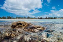 Settlement reef, Aldabra