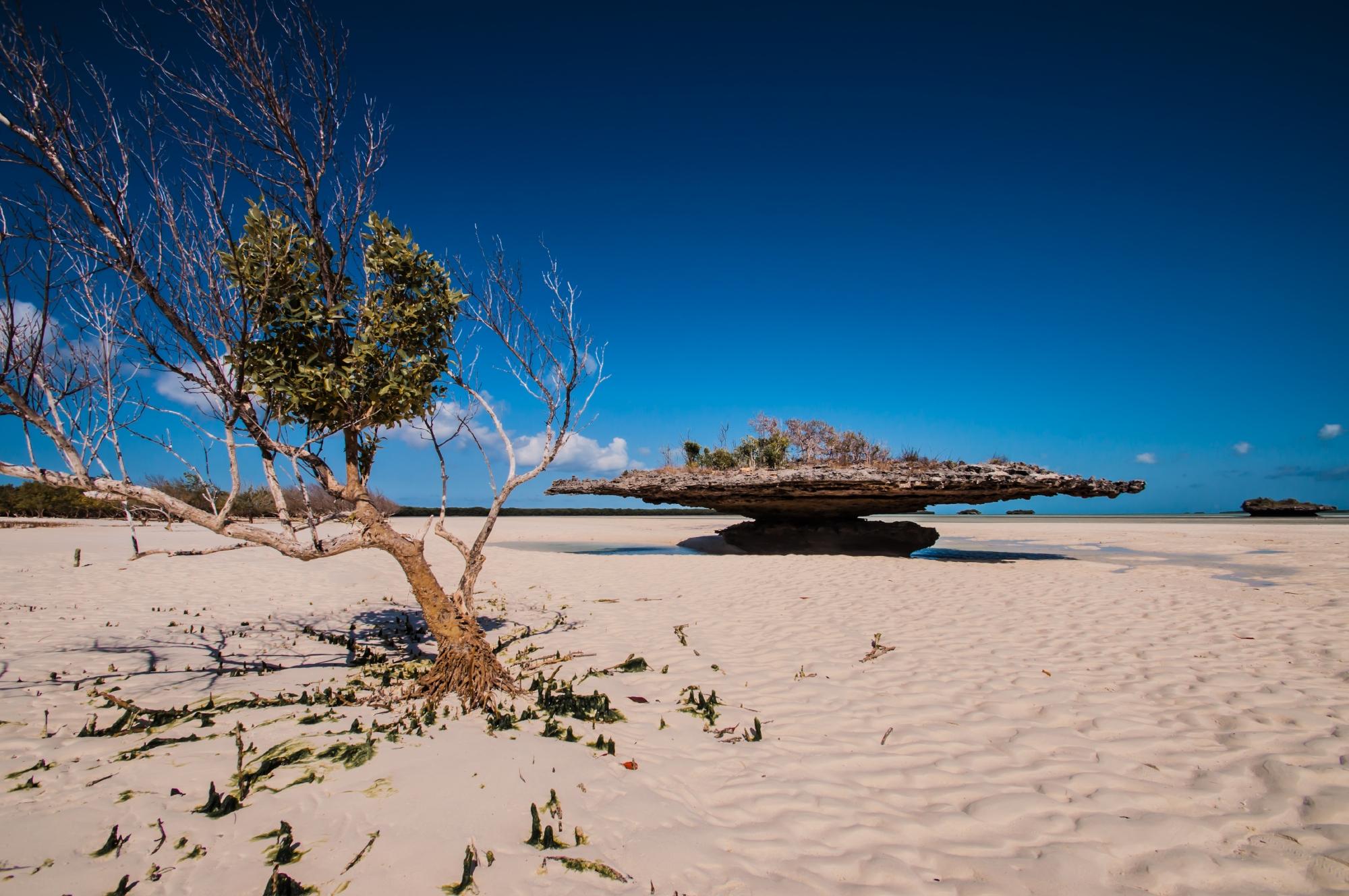 Champignon islet, Aldabra