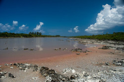 Booby pond, Little Cayman