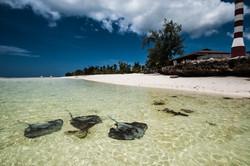 Sharks and rays, Aldabra