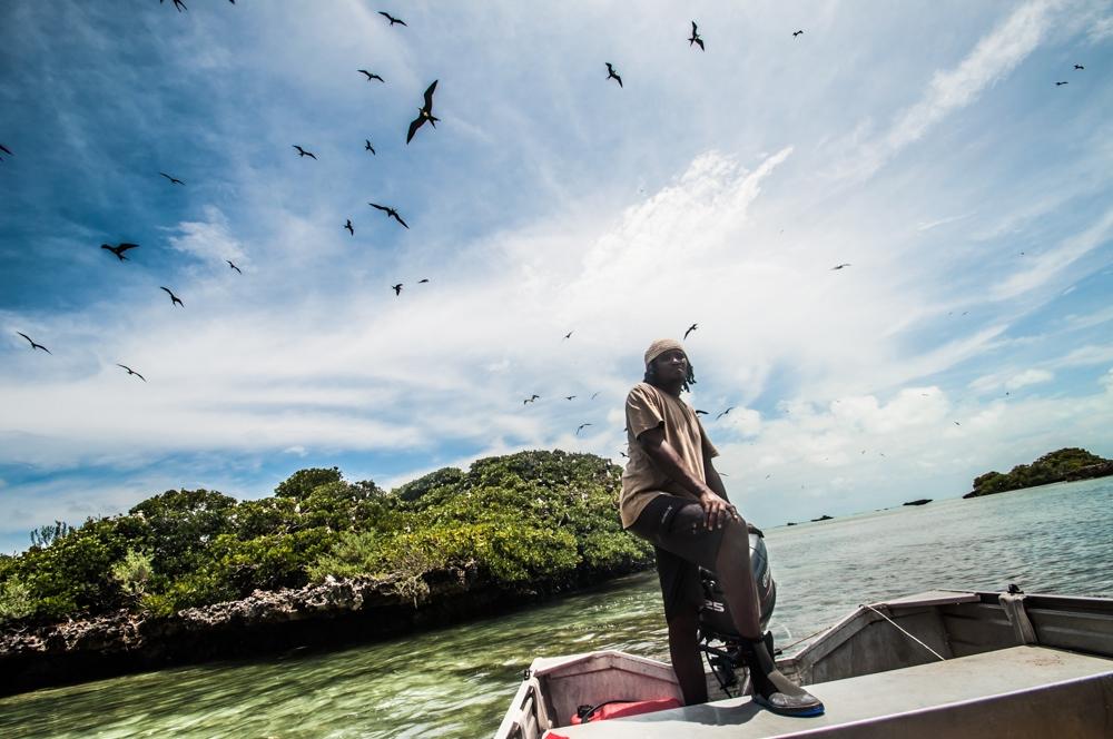 Frigate colony, Aldabra
