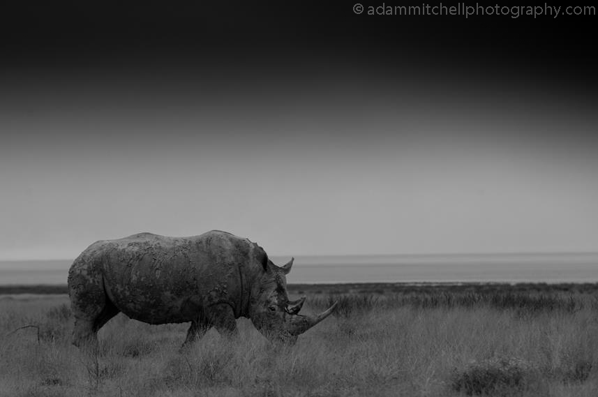 Rhino, Etosha