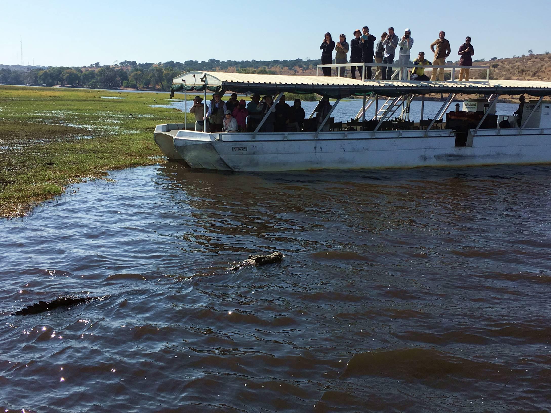 chobe_botswana_crocodilo_3
