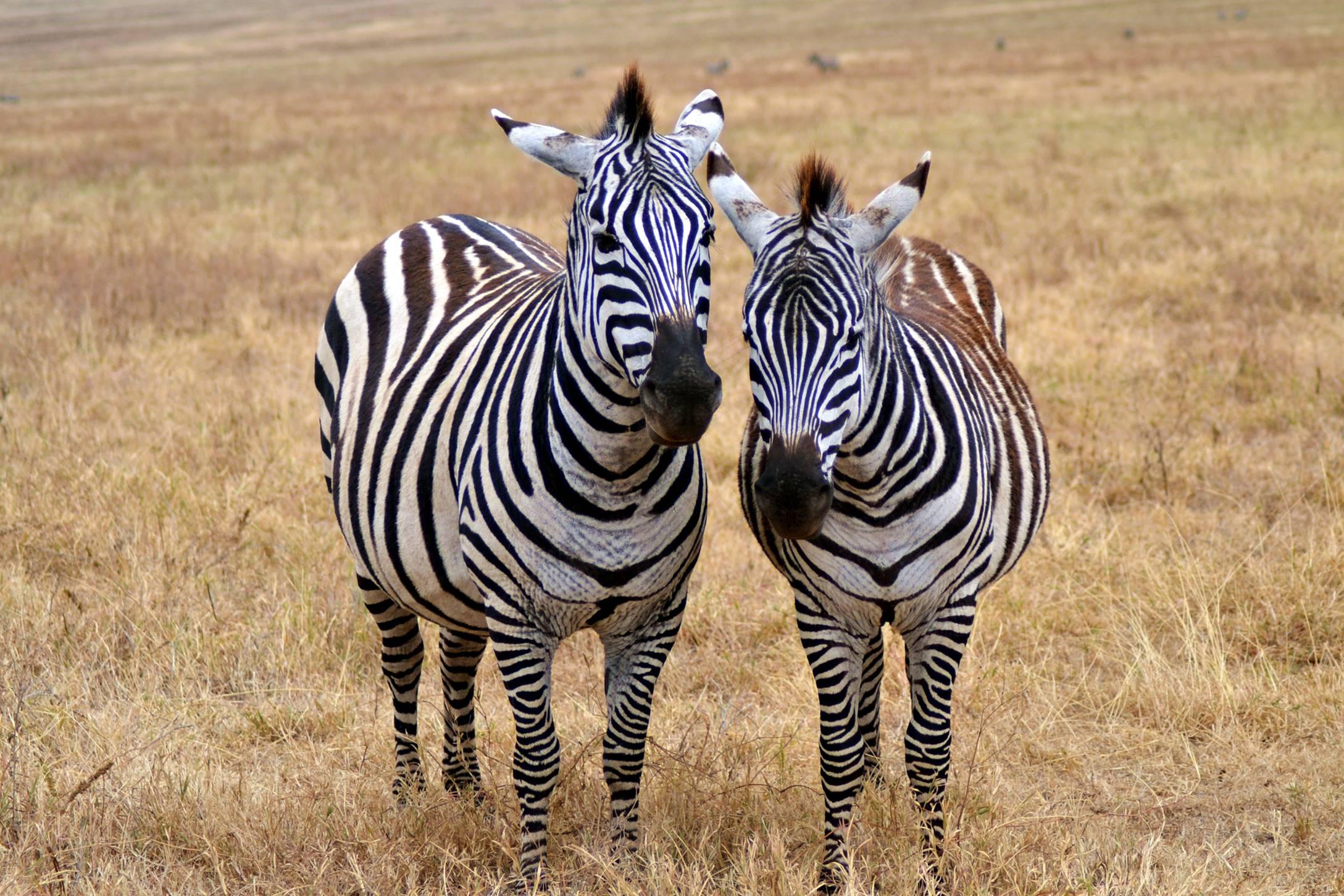 safari_tanzania_ngorongoro_9