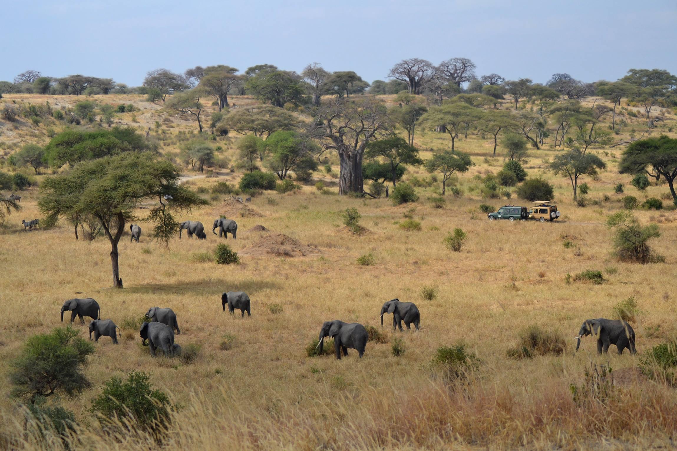 safari_tanzania_tarangire_5