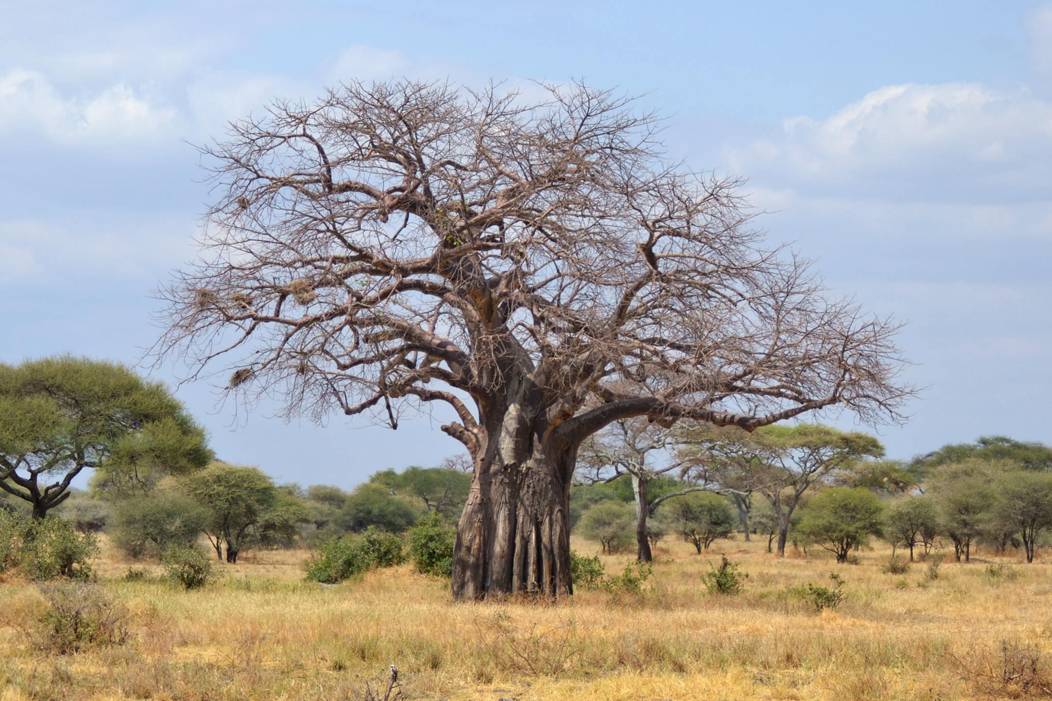 safari_tanzania_tarangire_2