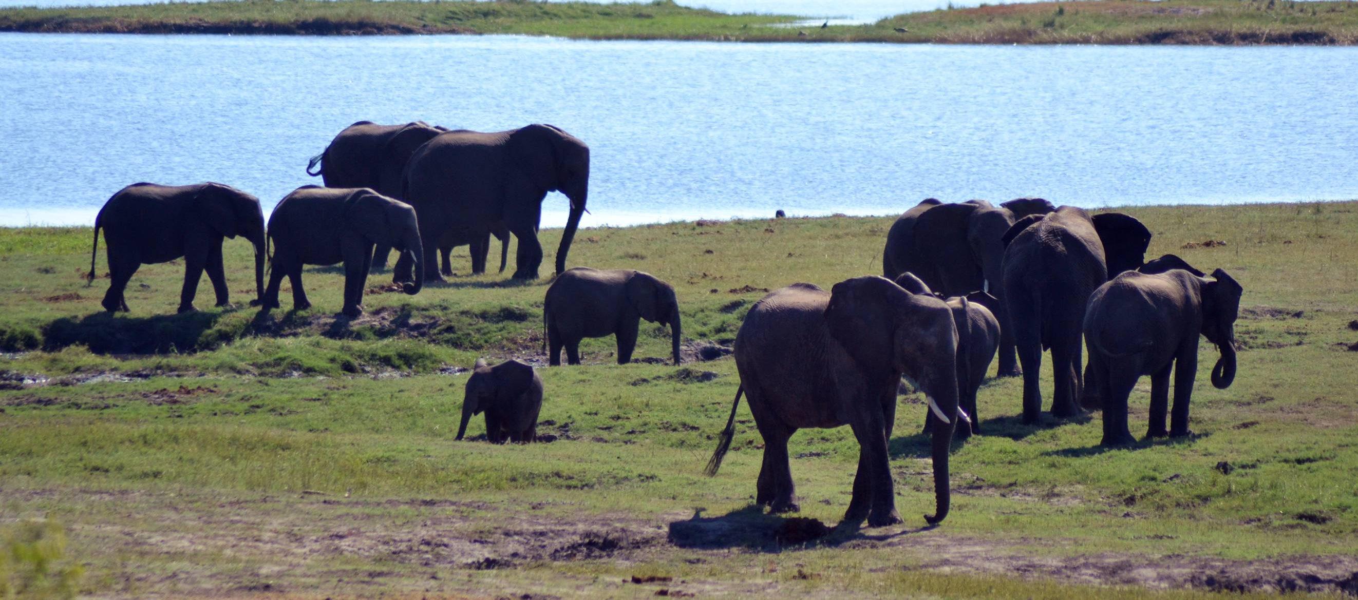 chobe_botswana_elefante_4_edited