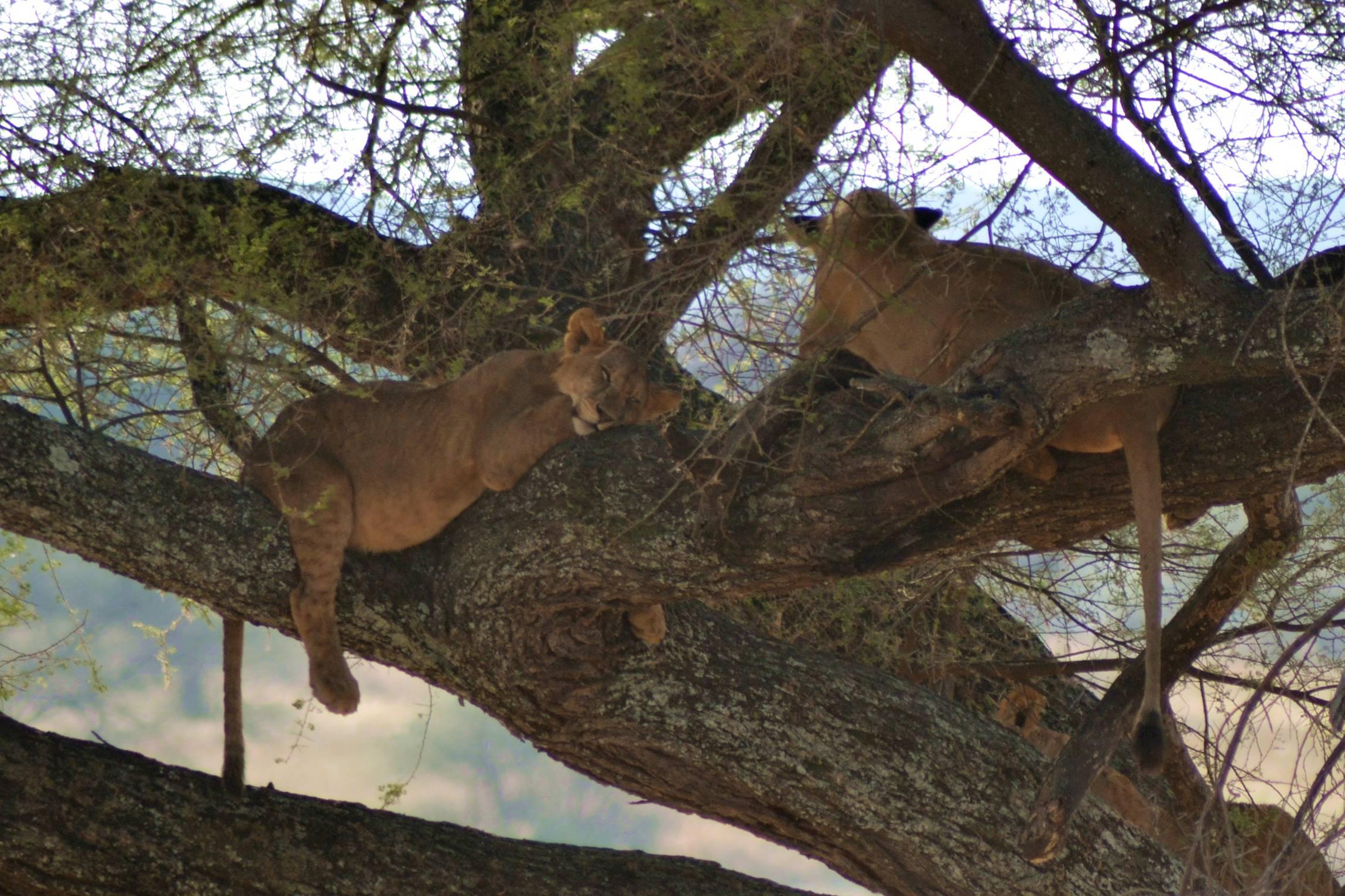 safari_tanzania_tarangire_7