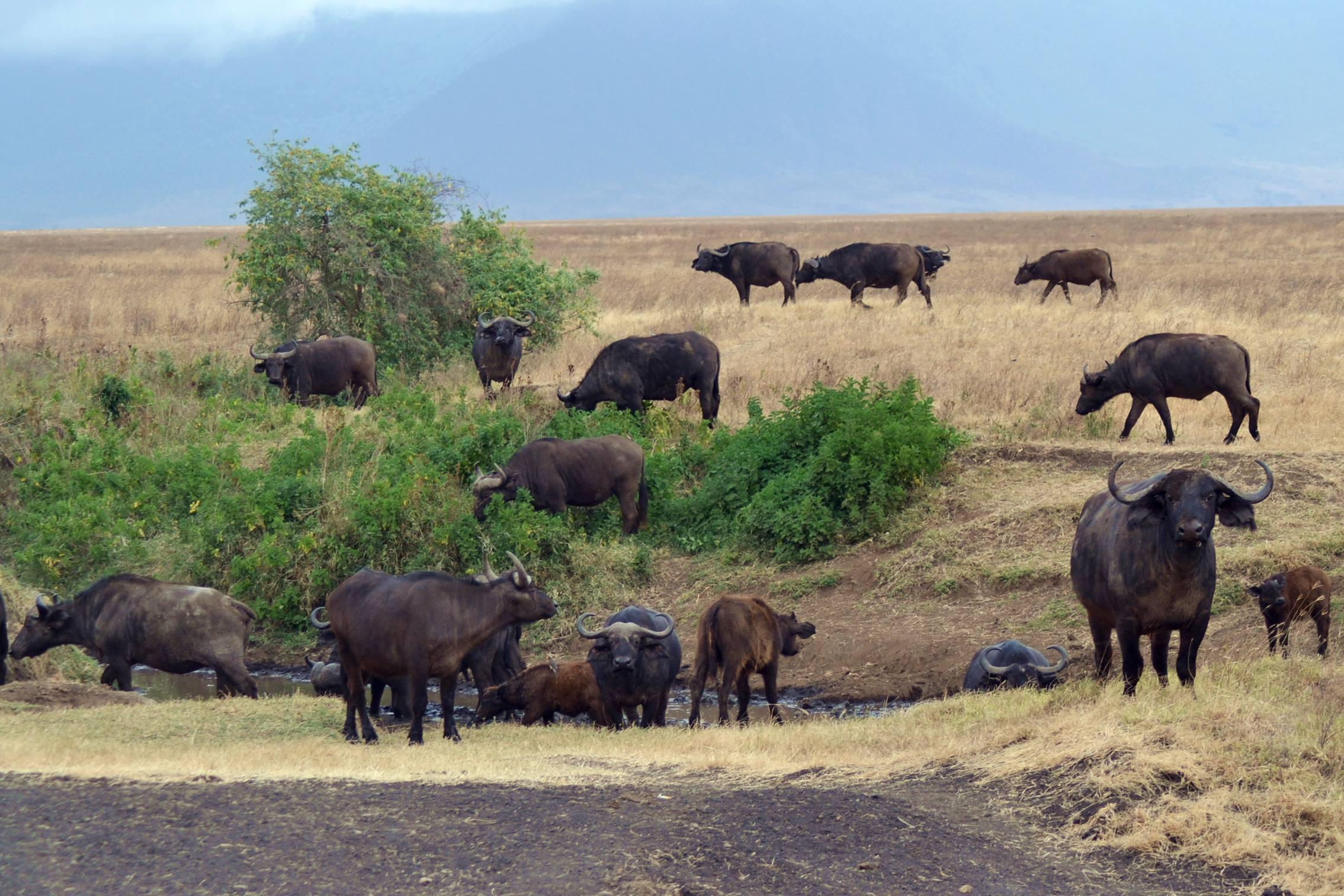 safari_tanzania_ngorongoro_7