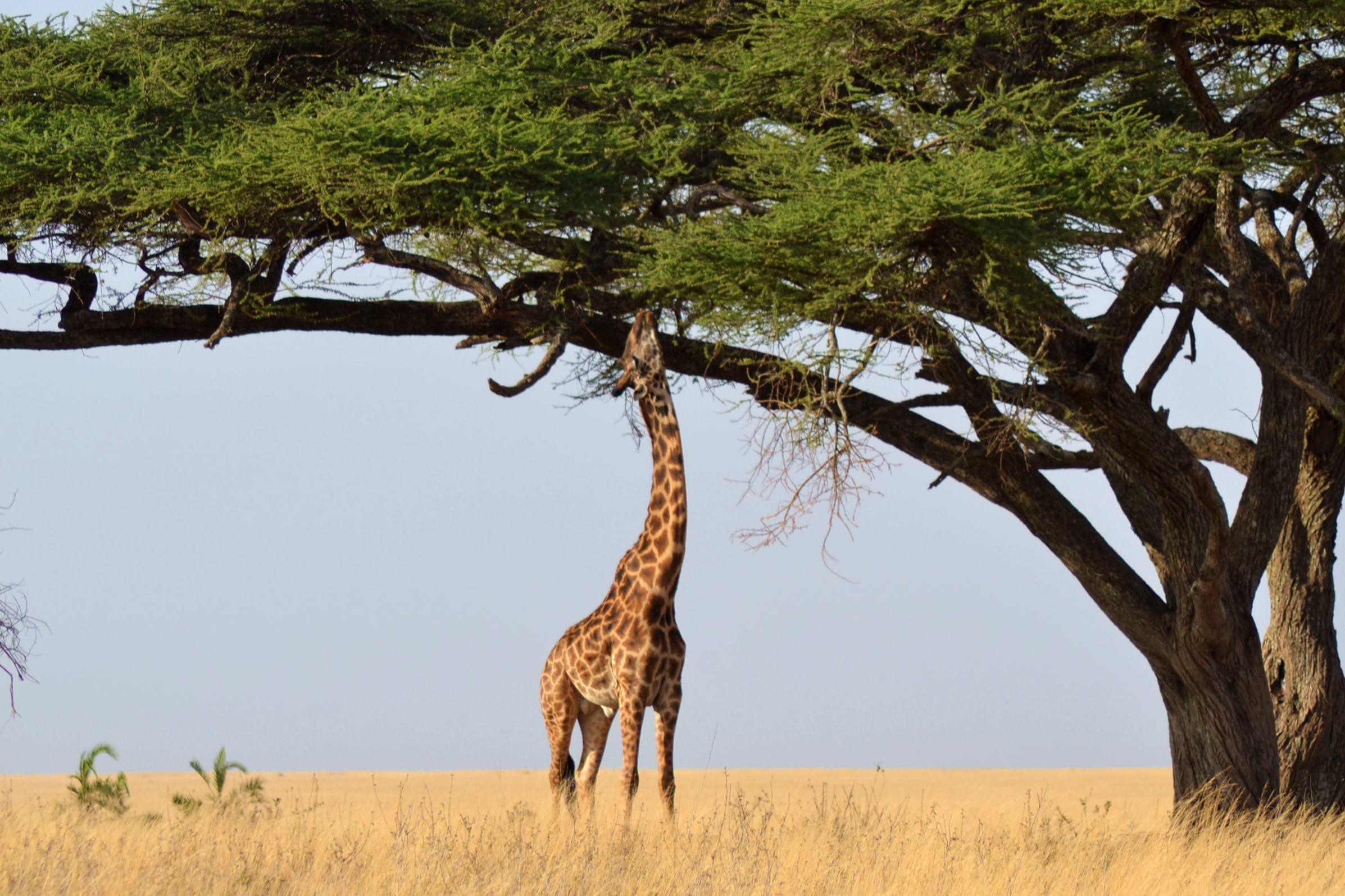 safari_tanzania_serengeti_4