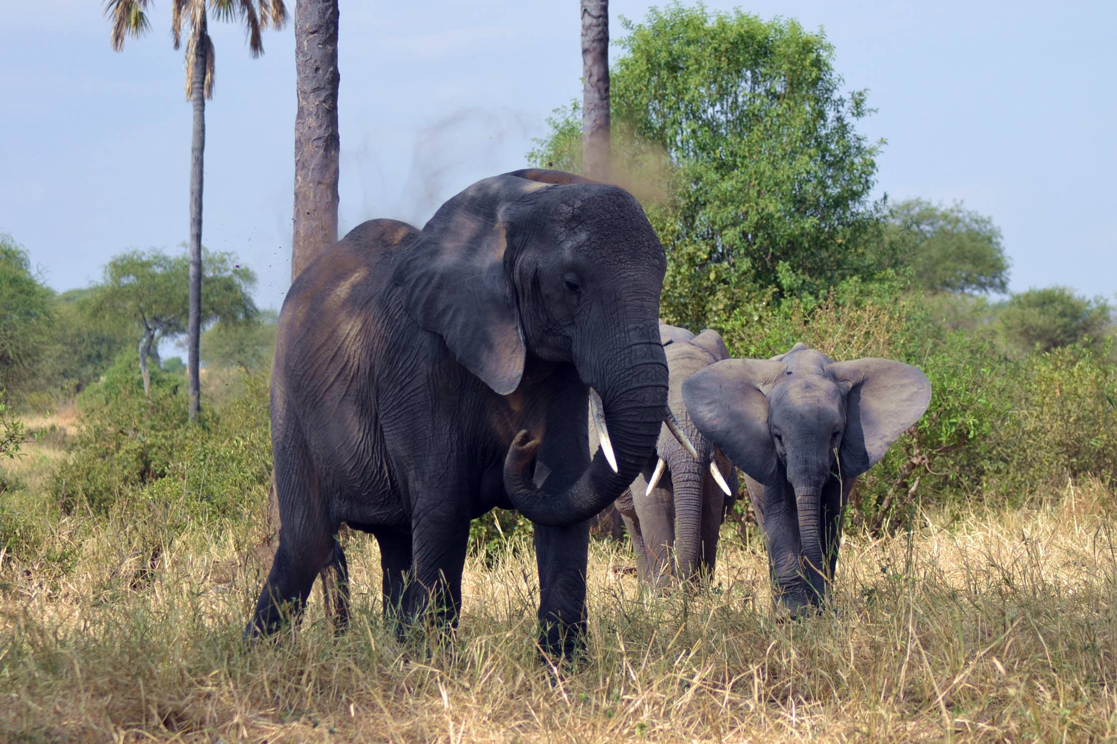 safari_tanzania_tarangire_6