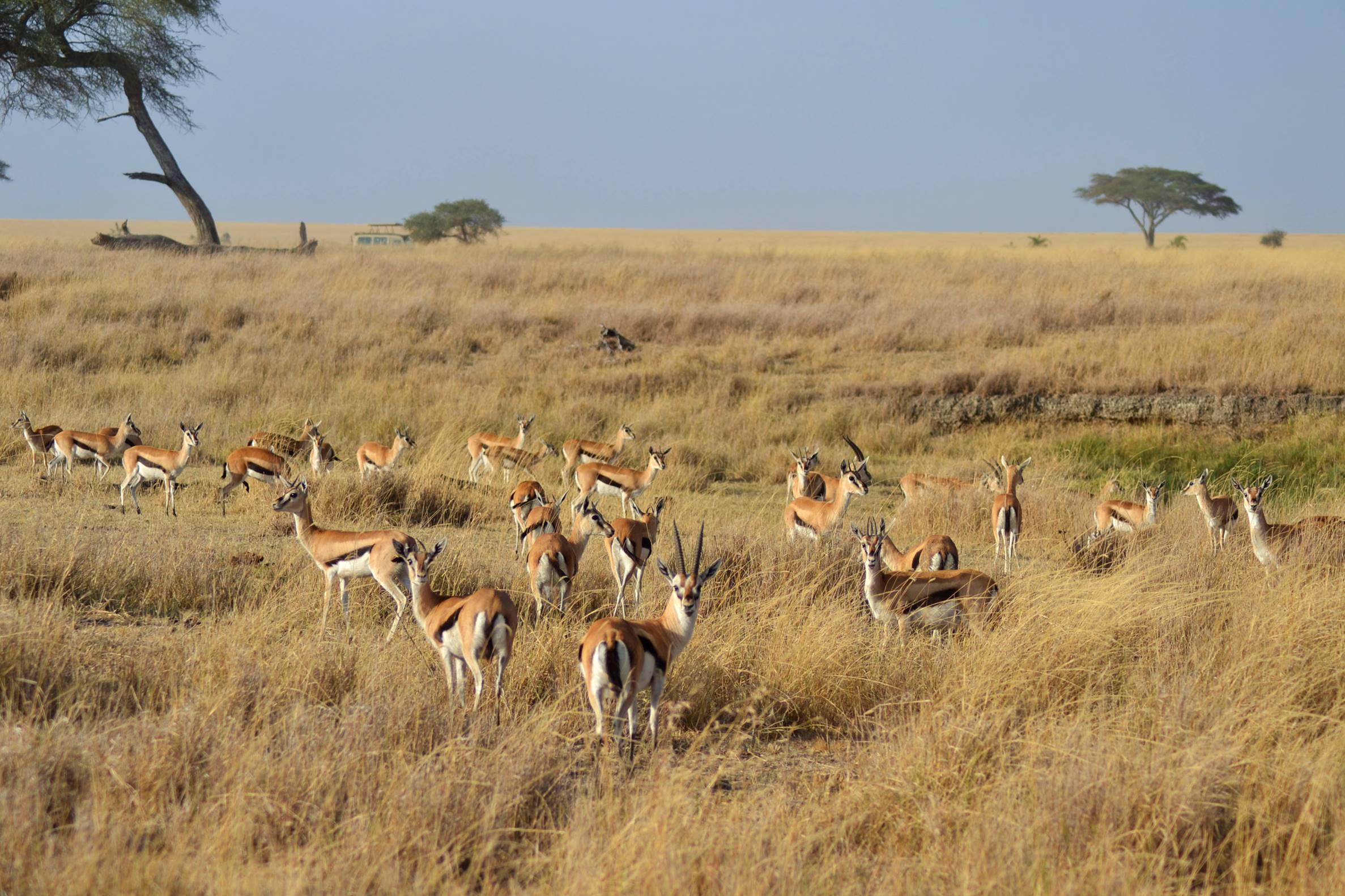 safari_tanzania_serengeti_3