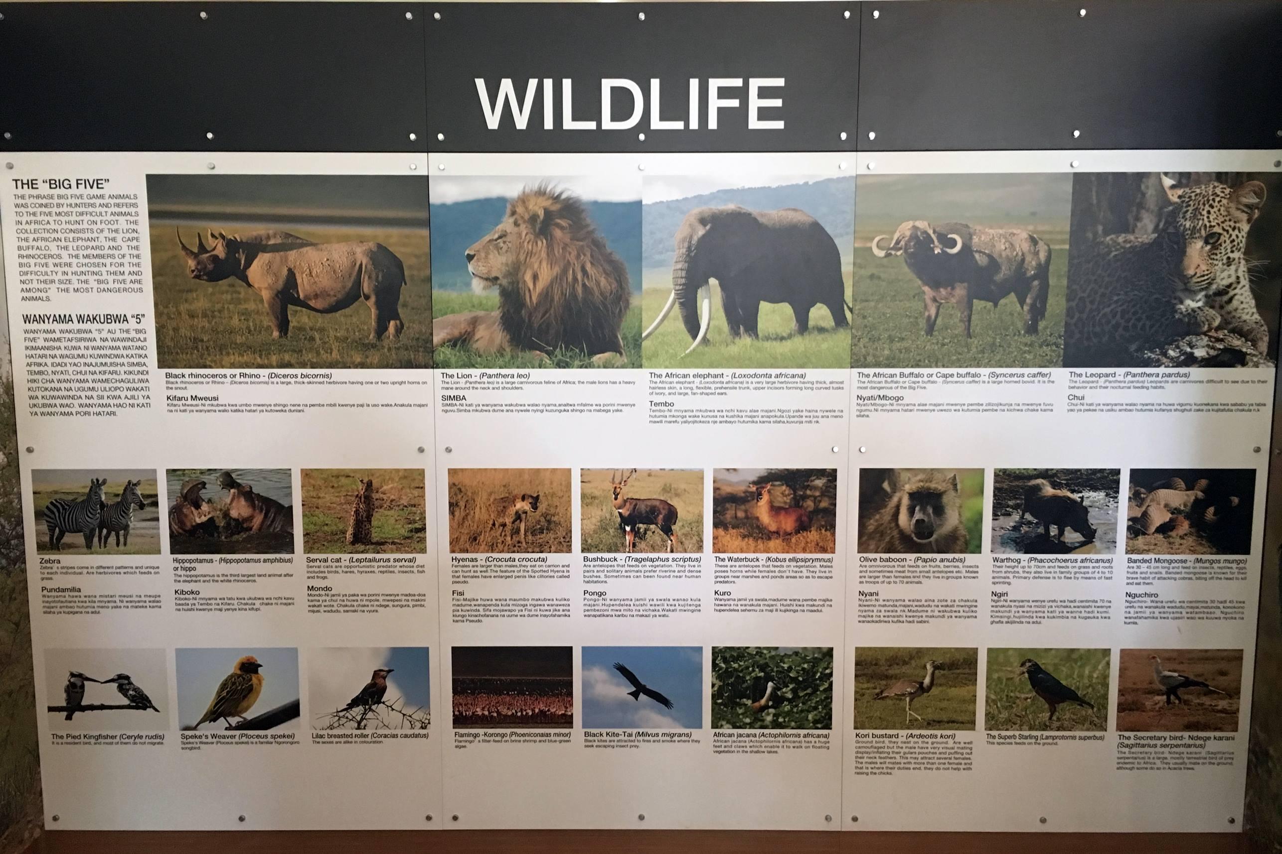 safari_tanzania_bigfive